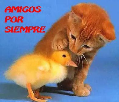 20070602122401-amigos-2.jpg